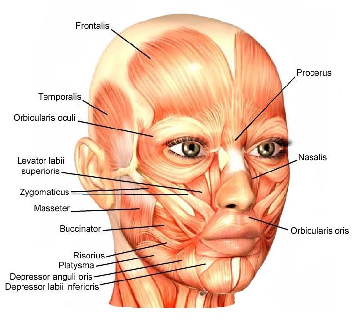 cơ biểu lộ cảm xúc trên khuôn mặt
