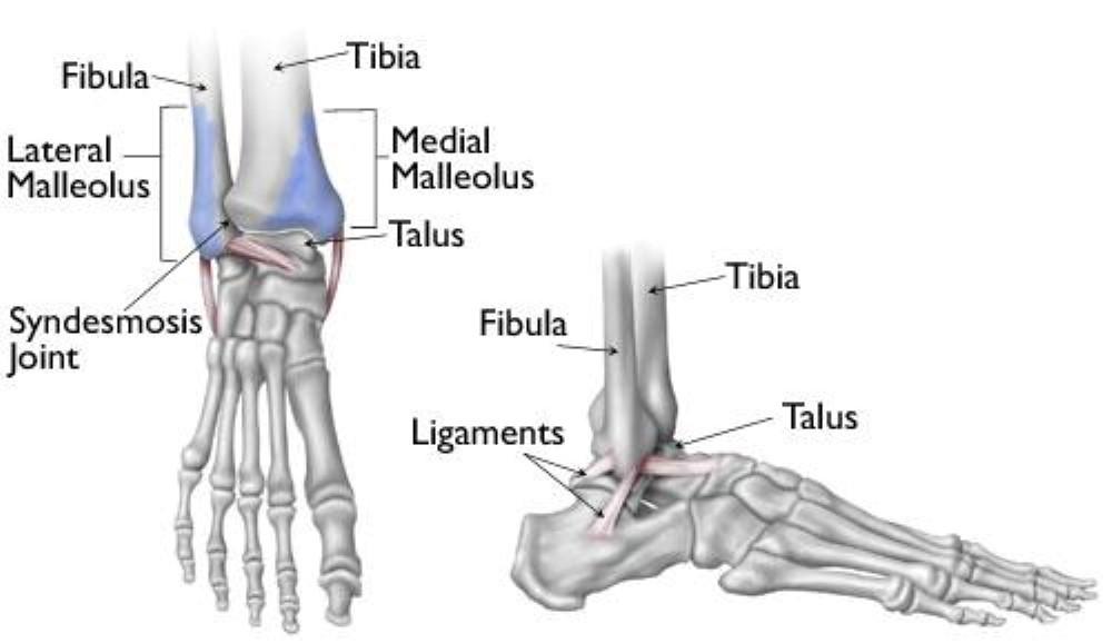 xương chày và xương mác